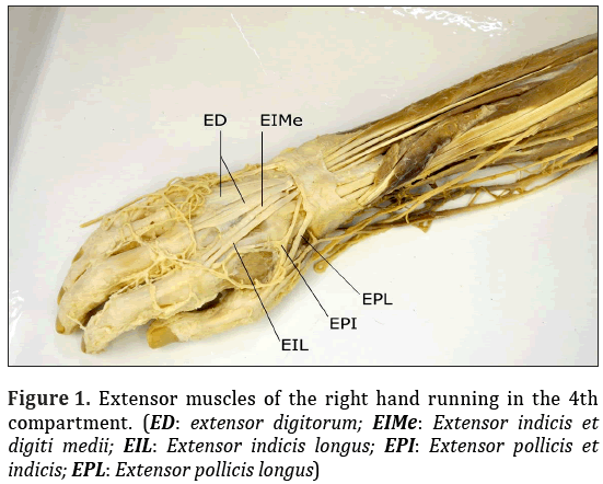 Anatomical-Variations-right-hand-running