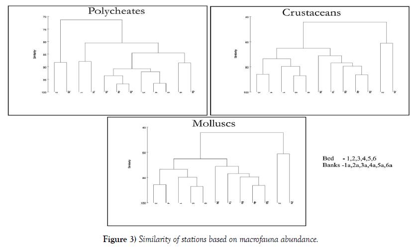 environmental-geology-macrofauna-abundance