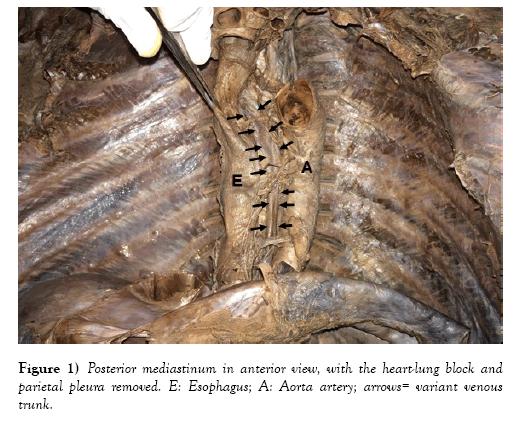 international-journal-anatomical-variations-mediastinum