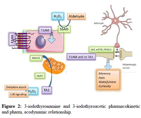 journal-endocrine-disorders-surgery-iodothyroacetic-pharmacokinetic